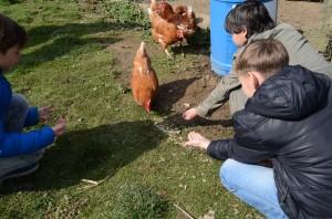 Biohof Hühner