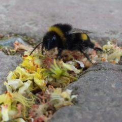 Projektwoche: Mehr als nur Honig!